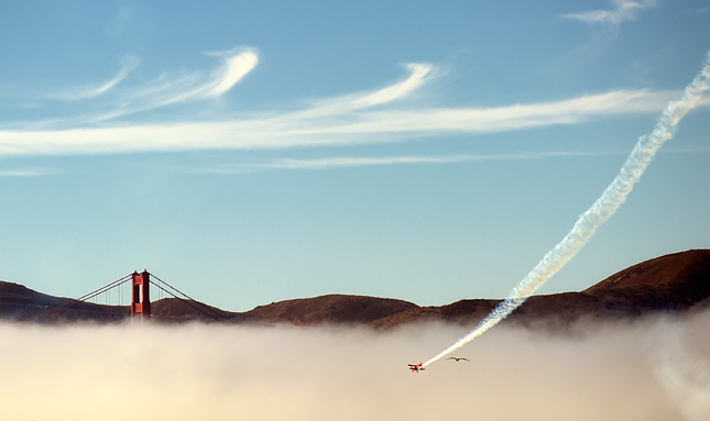 Seagull races biplane to the Golden Gate Bridge